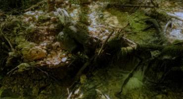 Jeu N° 36 – Gus au ruisseau de Mambouc